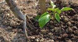 remedios caseros para el jardin
