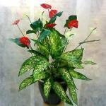 remedios caseros para que duren más las flores