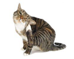 remedios caseros para las mascotas