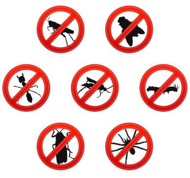 trucos caseros para combatir cucarachas y hormigas